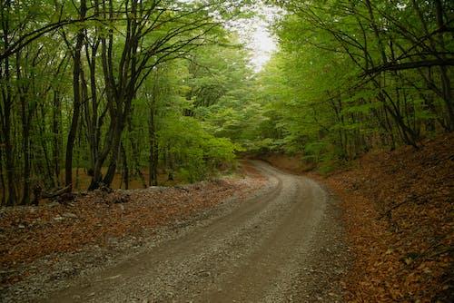 Photos gratuites de arbres, automne, chemin