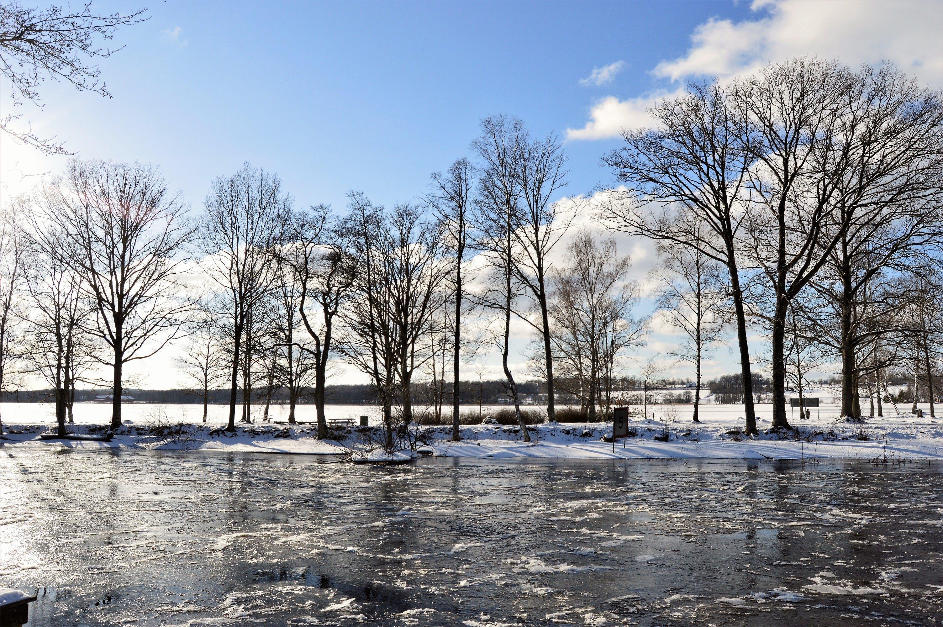 Brown Tree Lot on White Snow