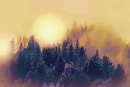 Fotobanka sbezplatnými fotkami na tému džungľa, les, stromy