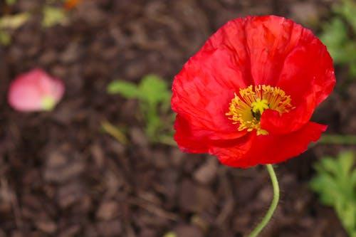 Darmowe zdjęcie z galerii z kwiat, kwiaty, piękne kwiaty