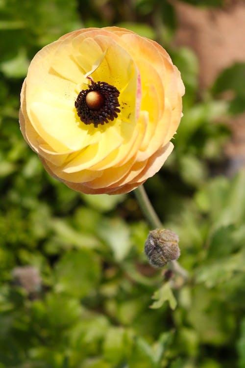 Darmowe zdjęcie z galerii z kwiaty, piękne kwiaty