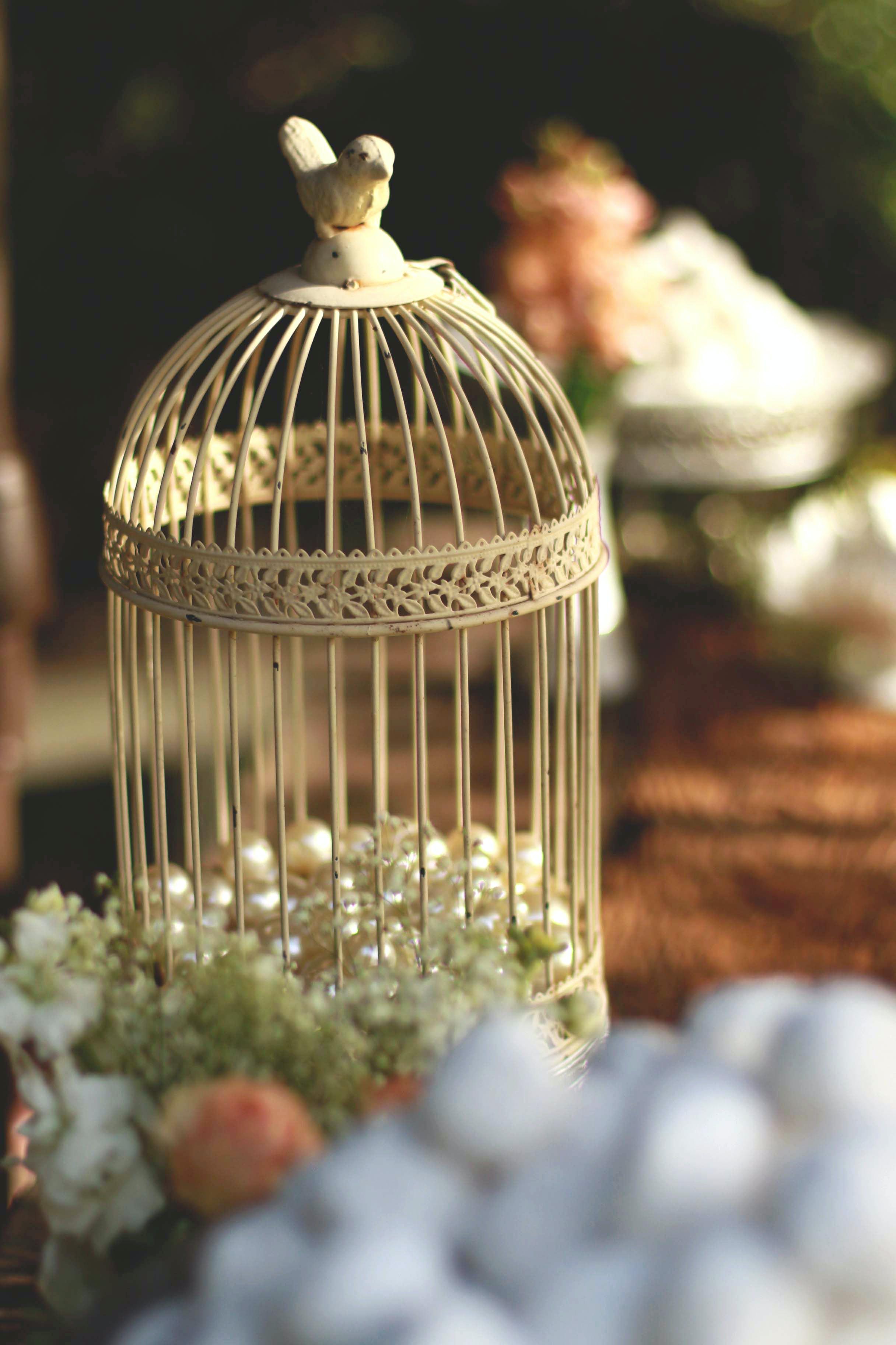 Kostenloses Stock Foto zu dekoration, käfig, vogelbauer