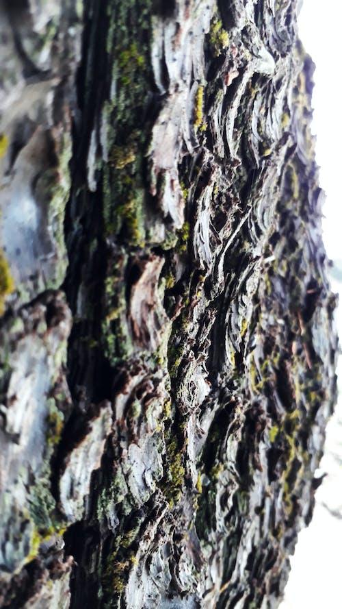 Fotos de stock gratuitas de árbol, corteza