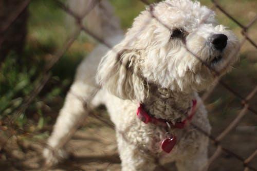 Kostnadsfri bild av däggdjur, djur, förtjusande, hund