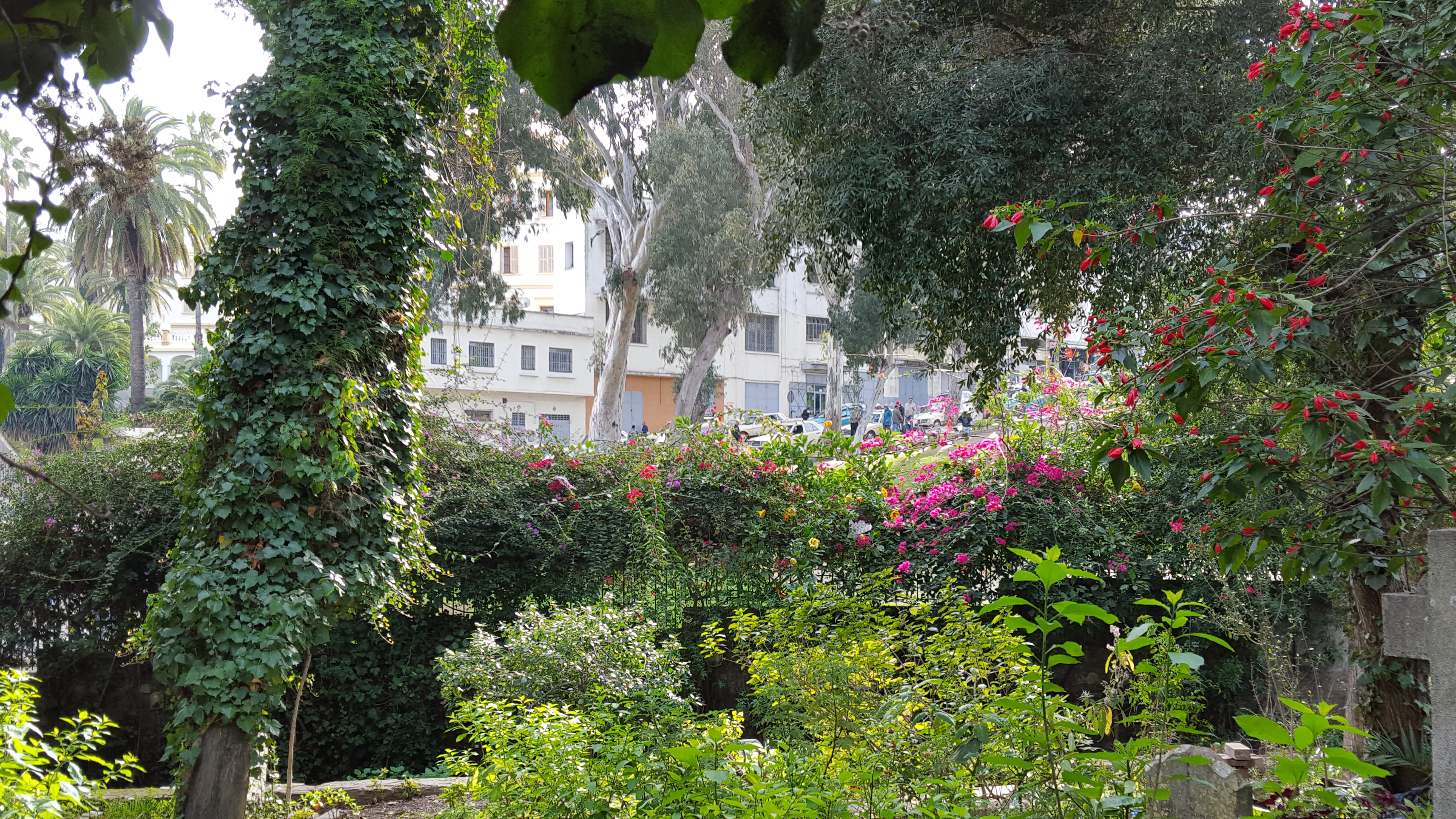 Free stock photo of churchyard, flowers, garden, morocco