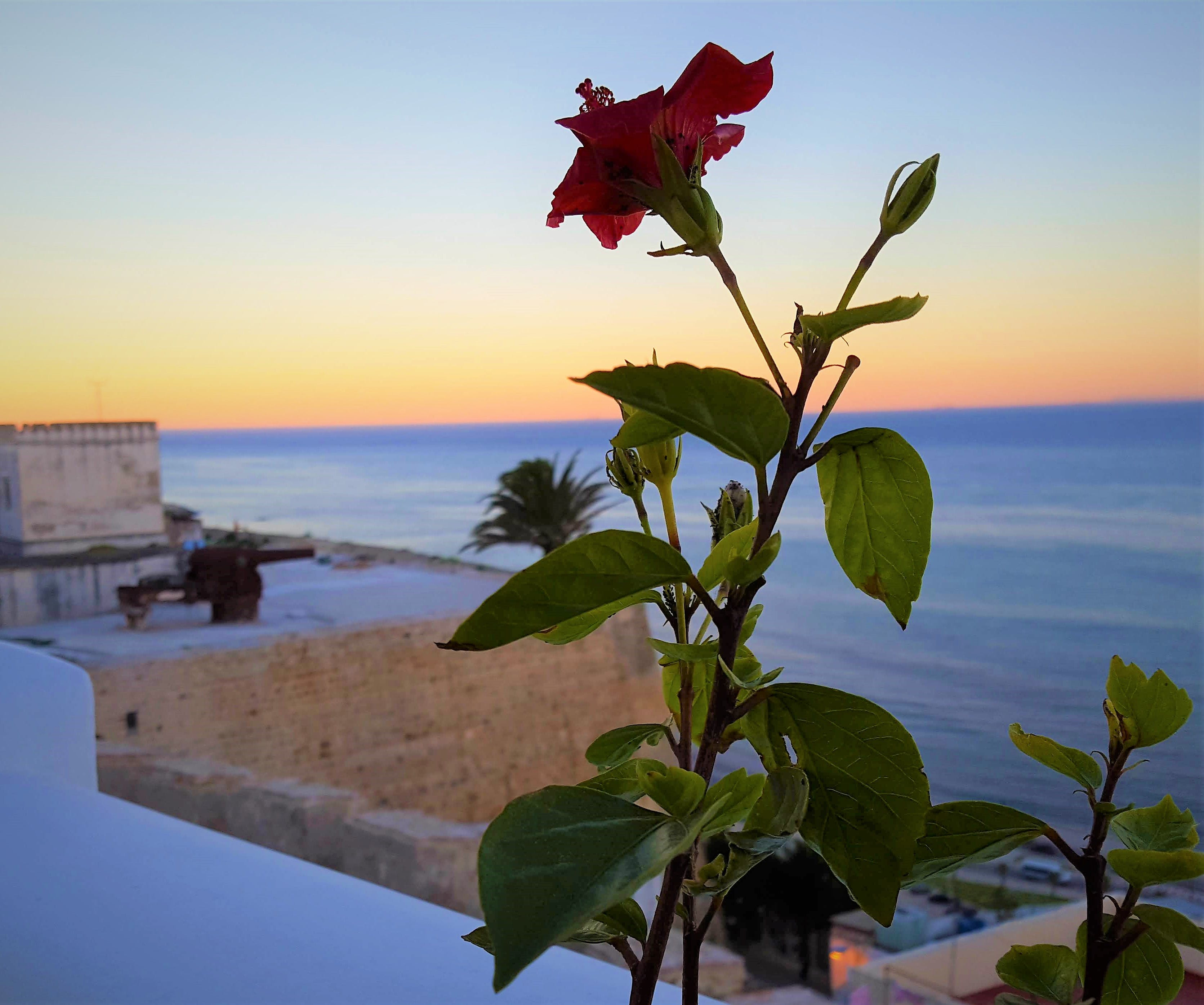 Free stock photo of flower, kasbah, mediterranean sea, outdoorchallenge