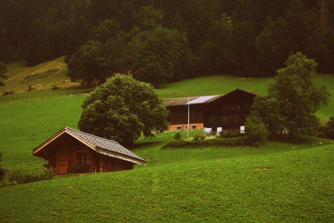 aliss, ánh sáng ban ngày, cánh đồng