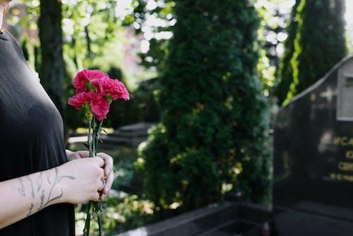 Fotobanka sbezplatnými fotkami na tému cintorín, exteriéry, flóra