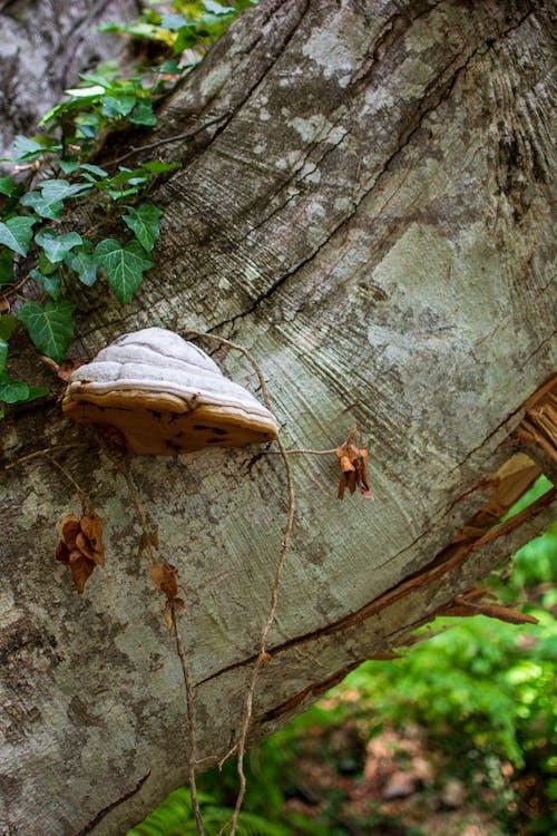 Free stock photo of fungus, nature, summer