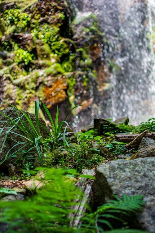 Free stock photo of nature, rocks, water