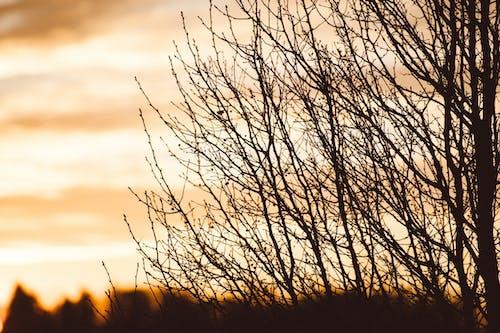 Free stock photo of Nicolas DeSarno, tree