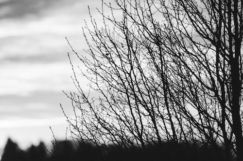 Free stock photo of Nicolas DeSarno, trees
