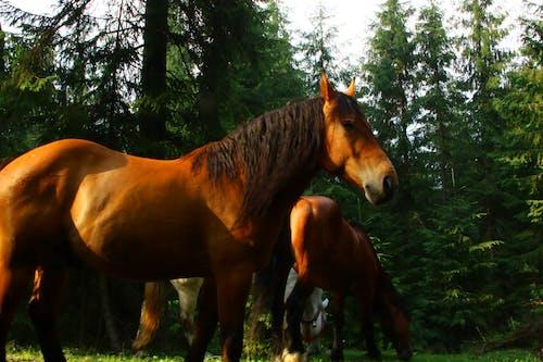 Imagine de stoc gratuită din cai, cal, cal salbatic