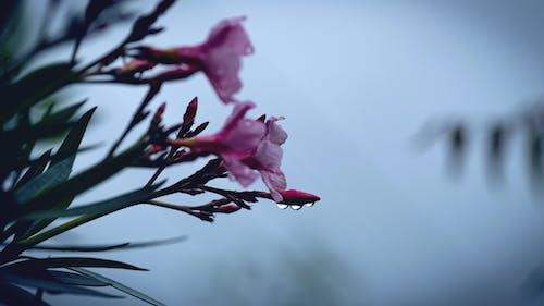 Free stock photo of after rain, beautiful flowers, flora