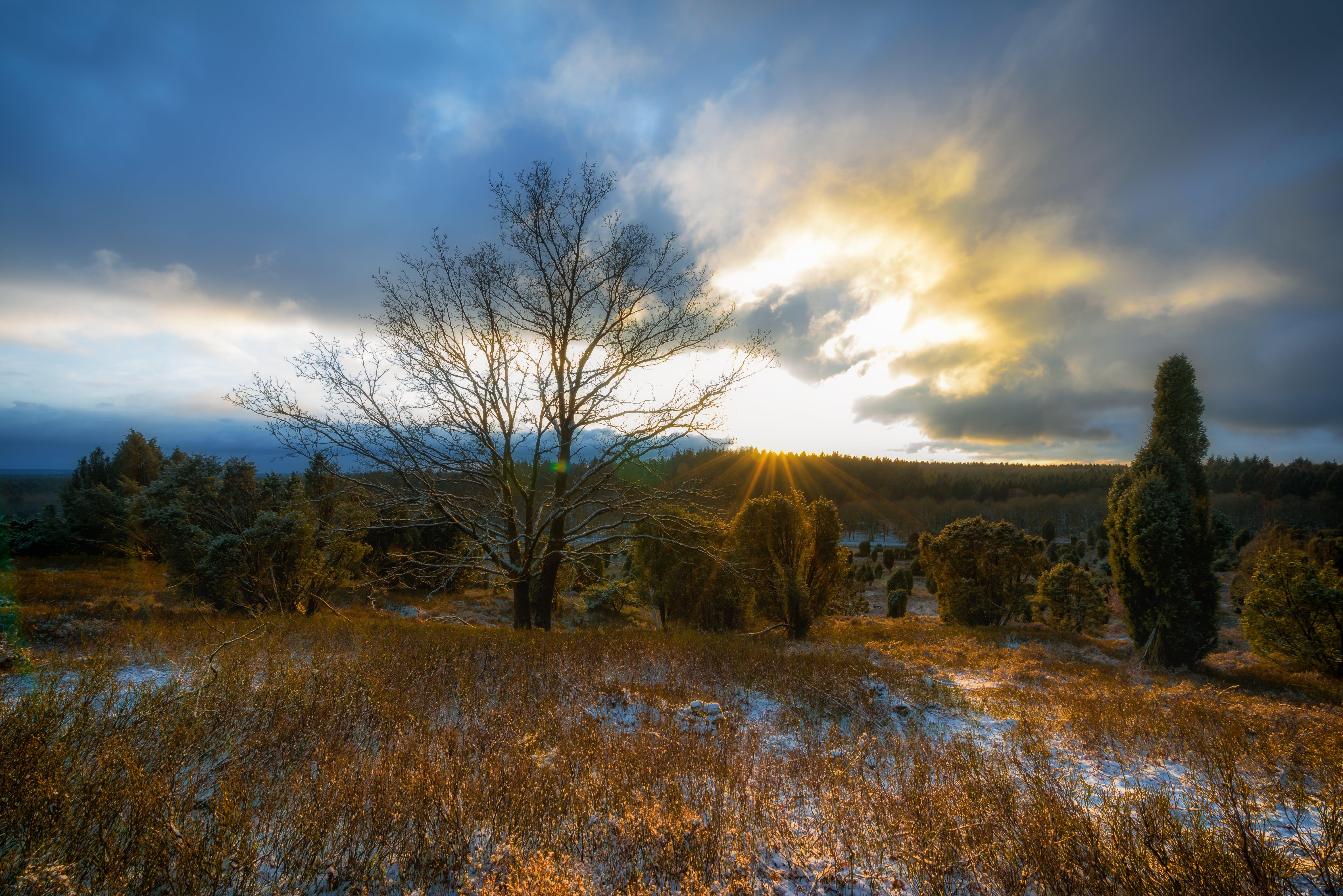 Gratis arkivbilde med daggry, gress, heier, himmel