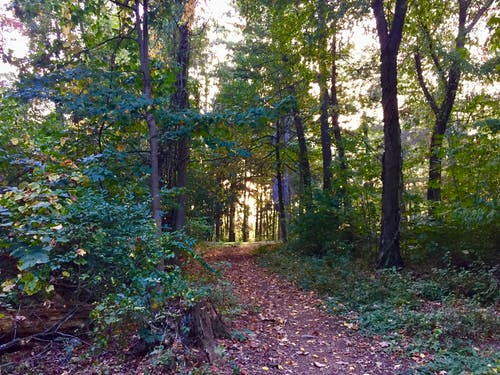 Free stock photo of forest trail, path, peaceful walk