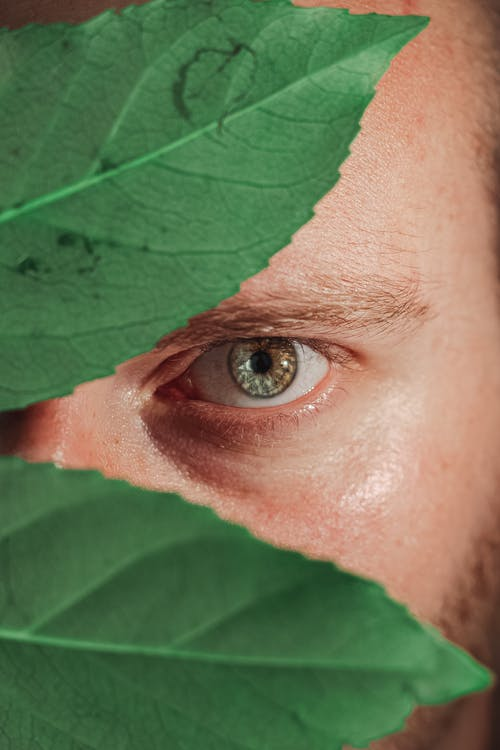 Persons Eye With Green Leaves