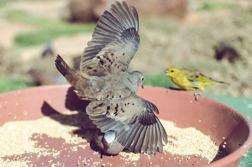 동물, 비둘기, 야생동물, 야생조류의 무료 스톡 사진