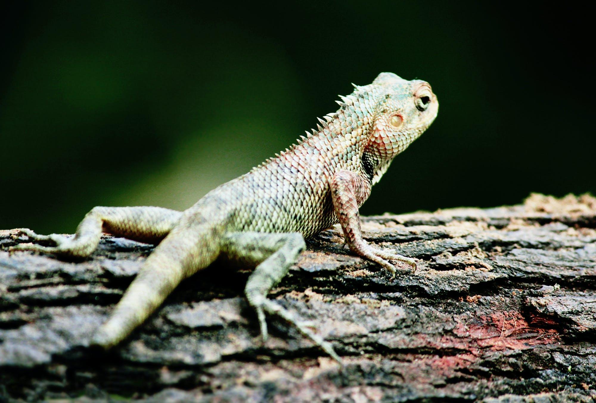 Fotobanka sbezplatnými fotkami na tému Canon, chameleón, divočina, fotografie zvierat žijúcich vo voľnej prírode