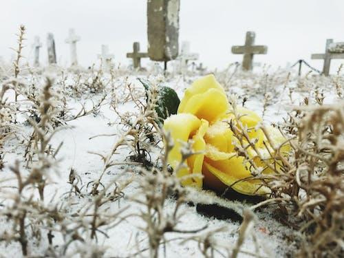 Foto d'estoc gratuïta de #outdoorchallenge, cementiri, groc, hivern