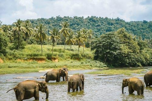 Elephants on Water