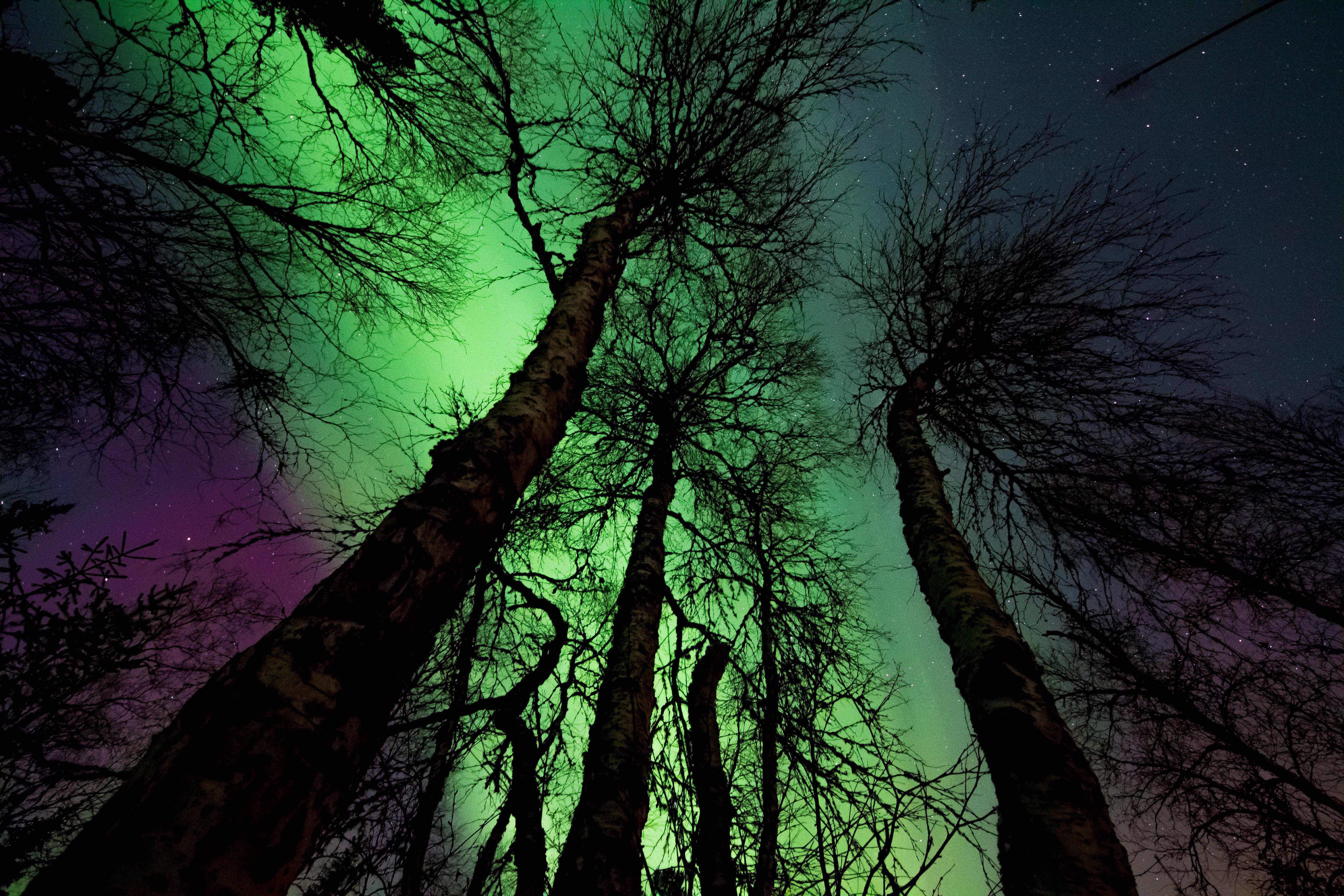 Kostenloses Stock Foto zu aufnahme von unten, bäume, draußen, dunkel