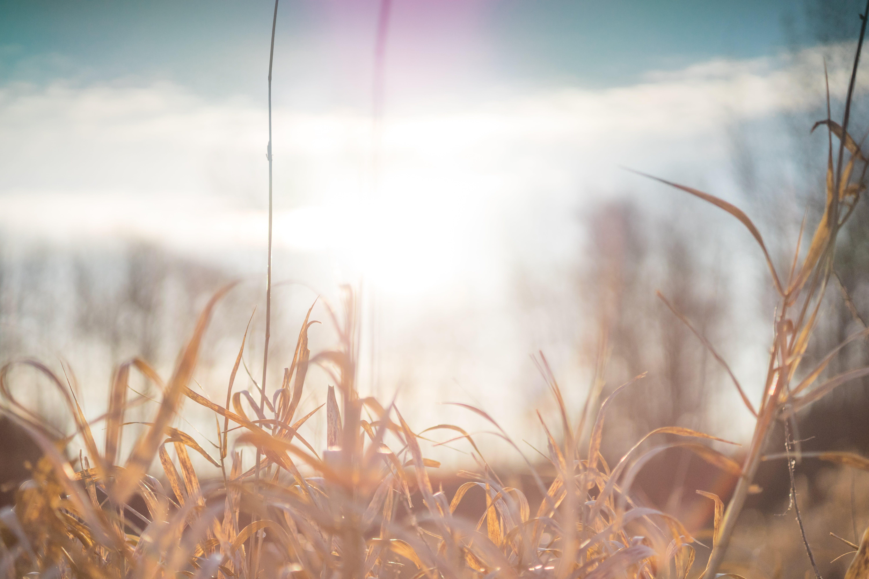 Foto d'estoc gratuïta de alba, canyes, cel blau, cel espectacular