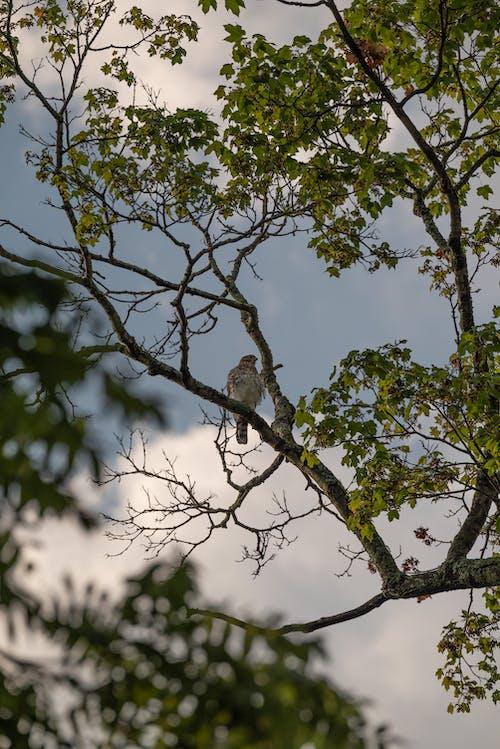 Foto stok gratis binatang, burung, cabang