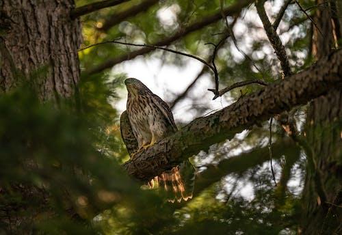 Foto stok gratis binatang, burung, burung elang