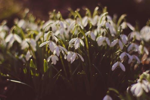 Gratis stockfoto met bloemen, depth of field, fabrieken, flora