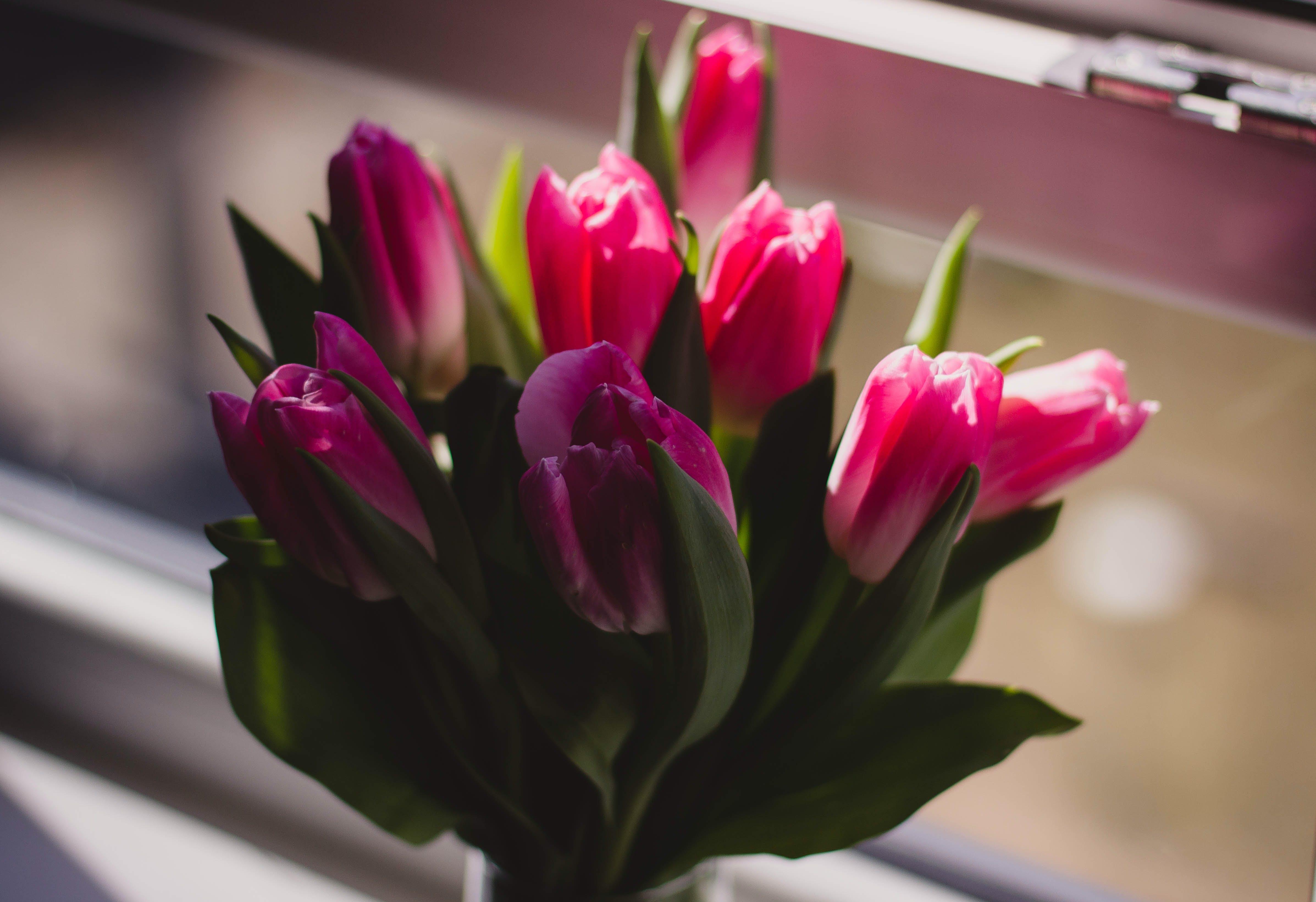 Základová fotografie zdarma na téma aranžování květin, barvy, flóra, kvést