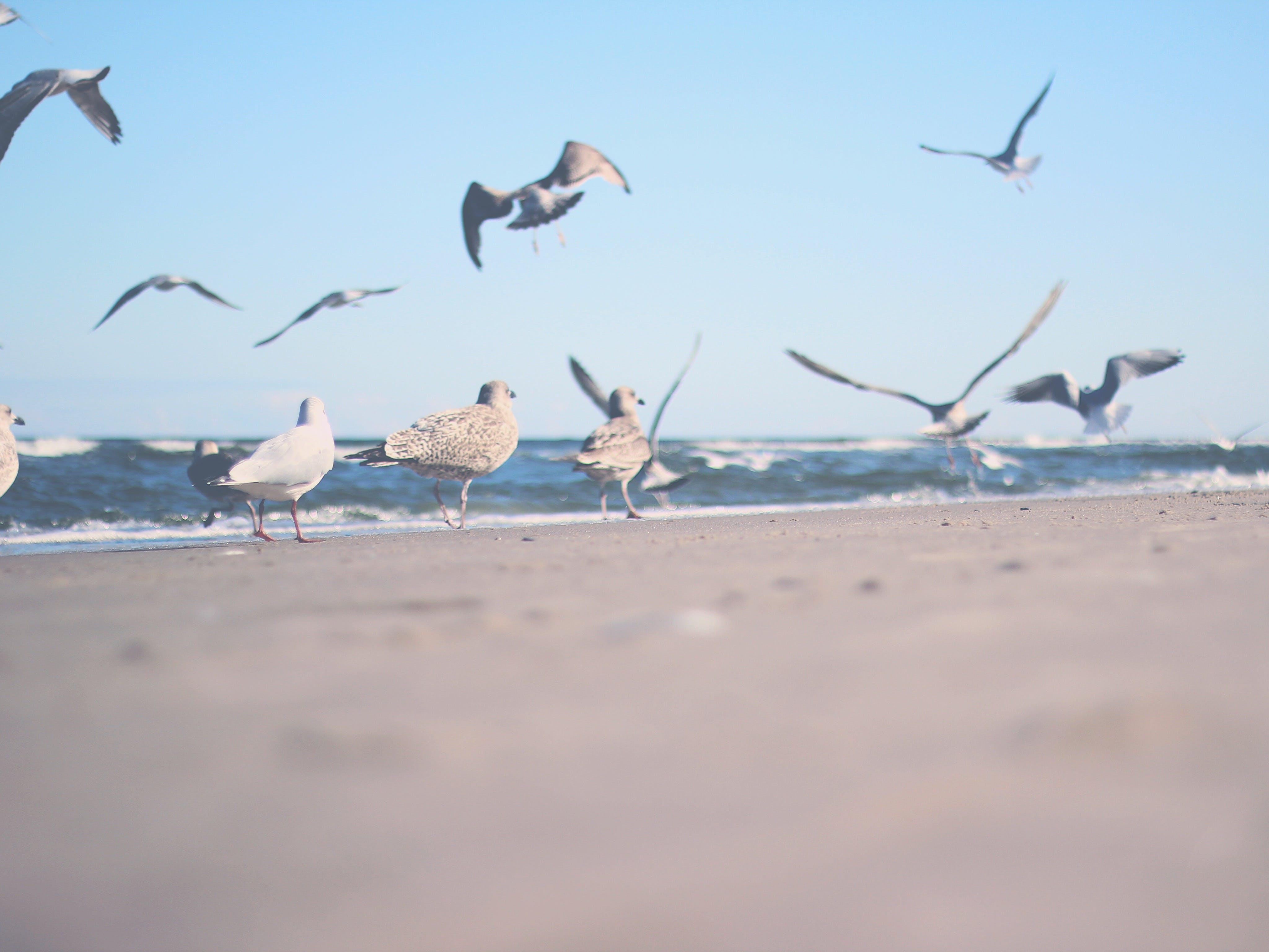Flock of Gulls on Shore Near Ocean at Daytime