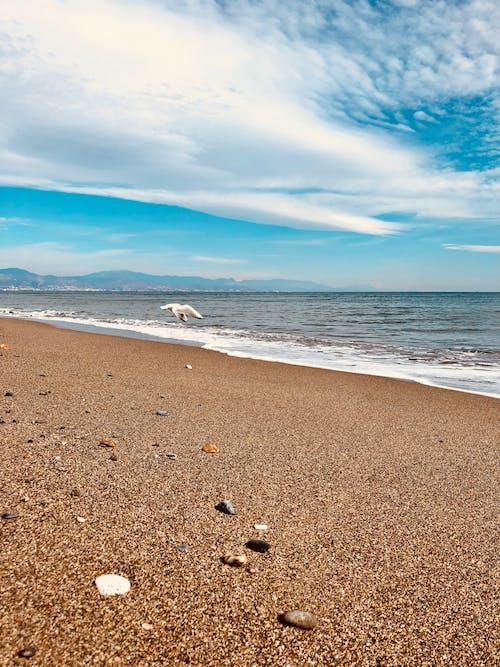 Kostenloses Stock Foto zu strand vogel meeuw schelpen zee meer blauen himmel sand