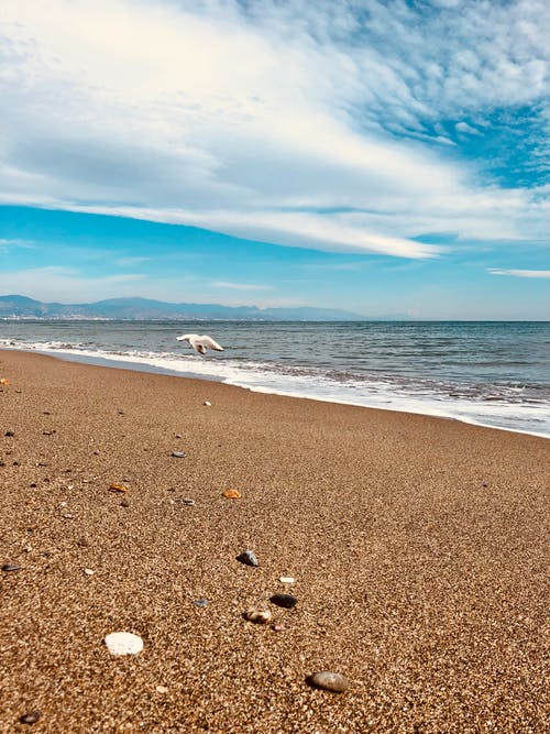 Free stock photo of Beach bird meeuw schelpen zee sea blue sky sand