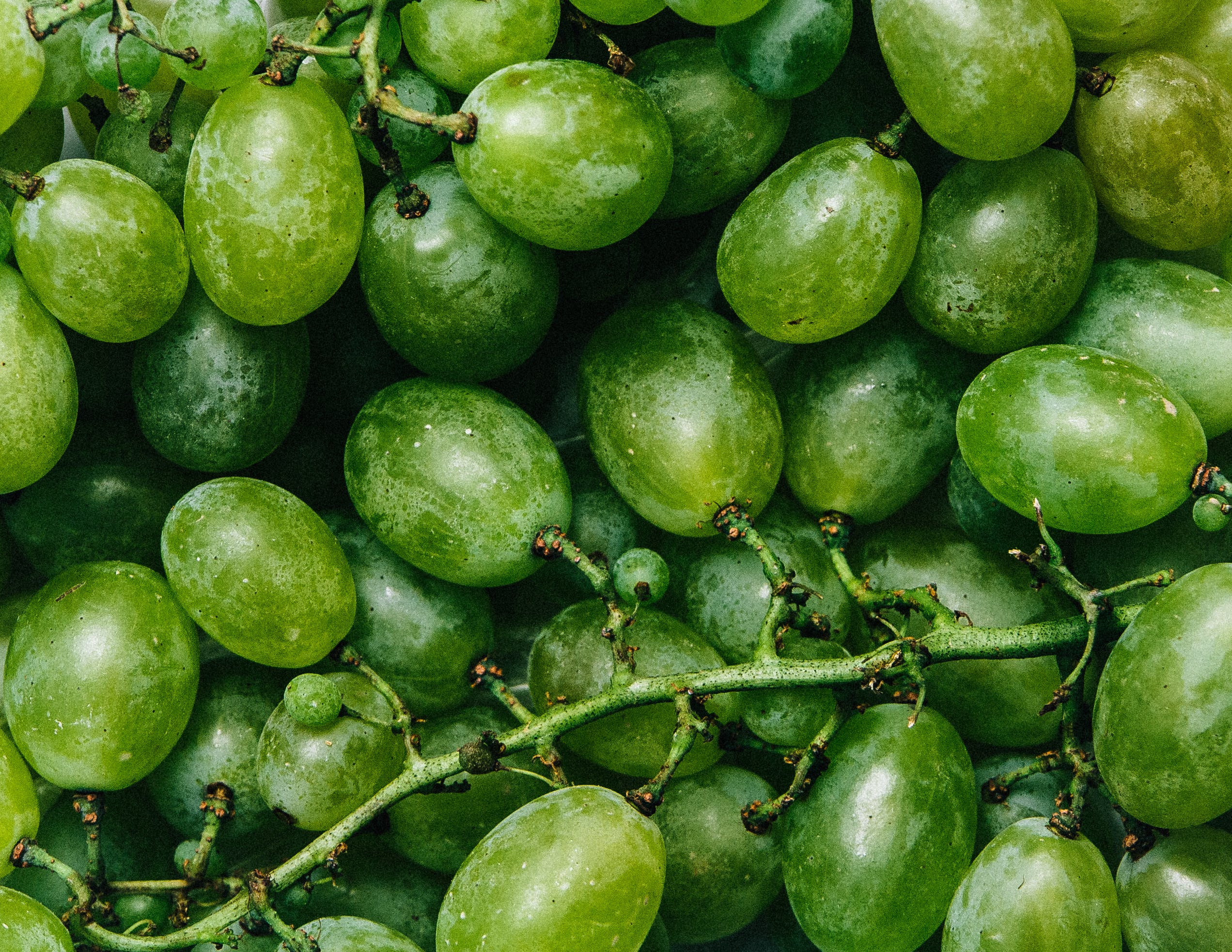Free stock photo of healthy, fruits, grapes