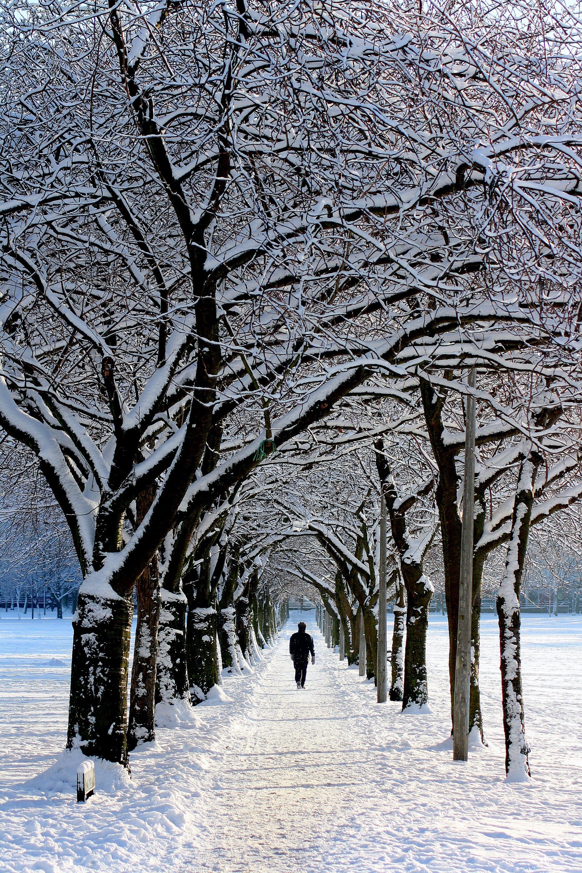 Man in Black Jacket Walking on Snowy Tree during Daytime