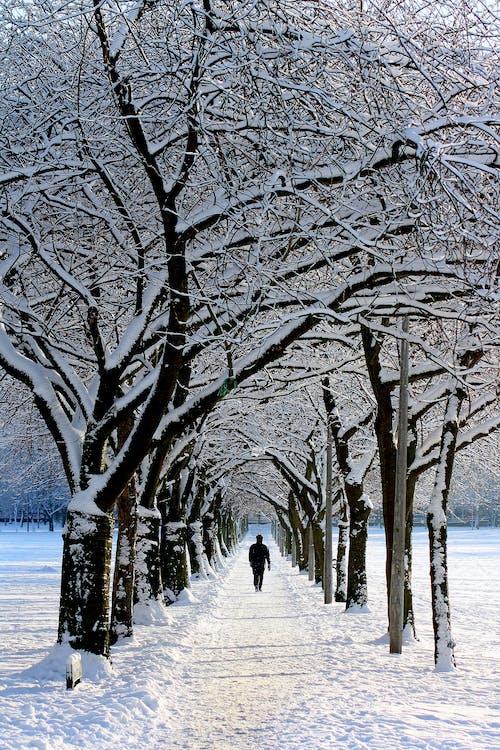 camminando, freddo, inverno