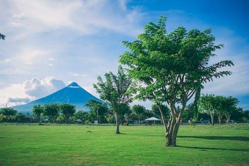 คลังภาพถ่ายฟรี ของ กลางวัน, กลางแจ้ง, ชนบท, ต้นไม้