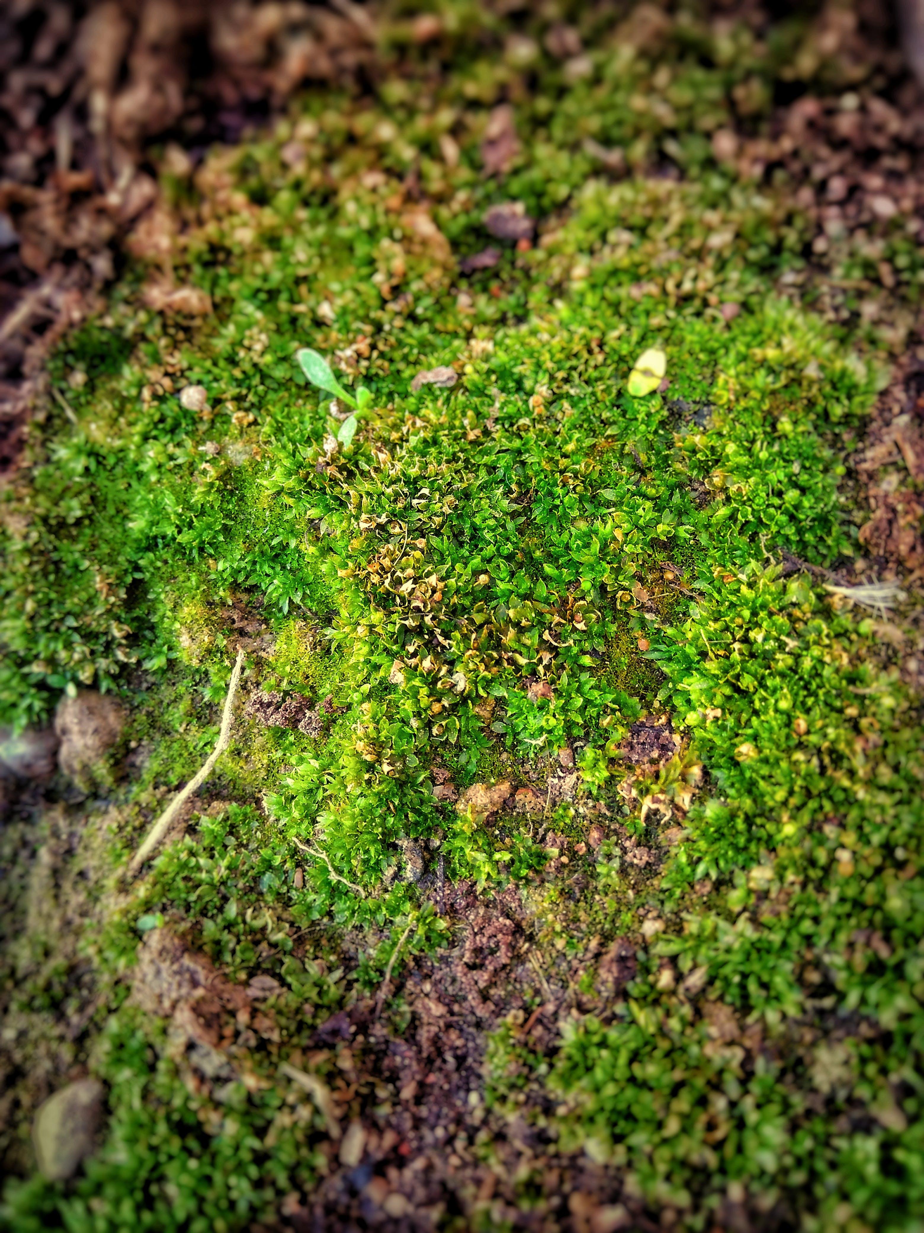 Shallow Focus Photo of Green Moss