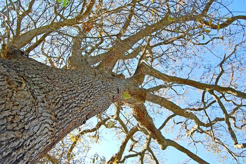Ingyenes stockfotó fa, tölgy témában