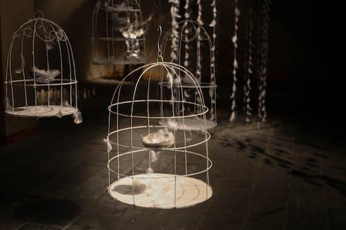 Gratis lagerfoto af fjer, fuglebur