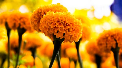 Selective Photo of Yellow Petaled Flowers