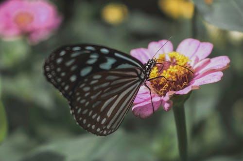 Free stock photo of butterfly, loifotos, macro