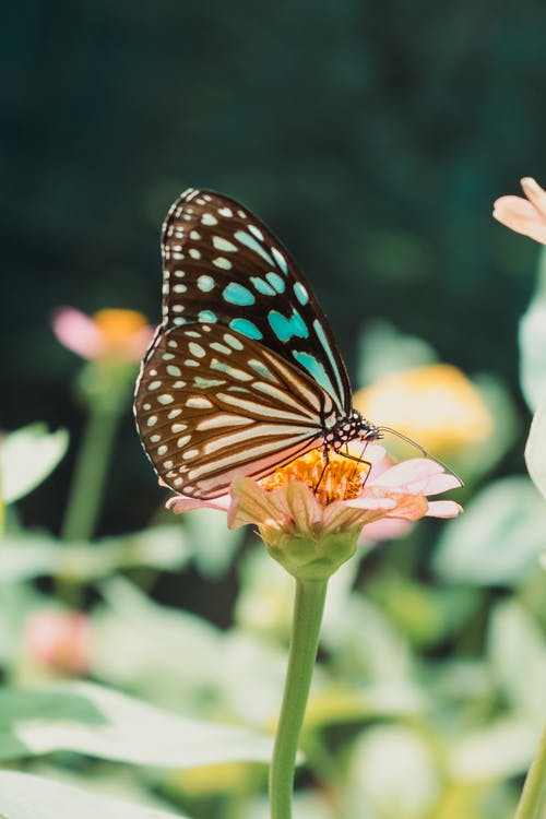 Monarch Butterfly Perched on Yellow Flower in Close Up Photography