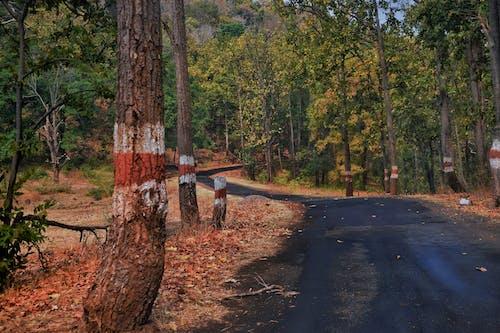 Immagine gratuita di alberi, asfalto, boschi, foresta