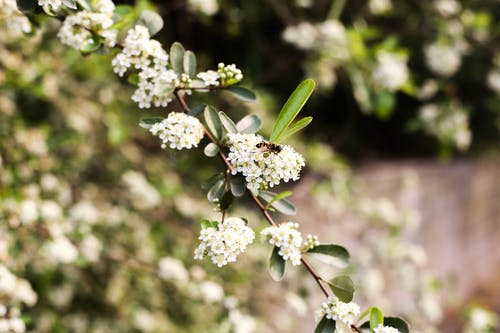 Gratis lagerfoto af bi på blomster
