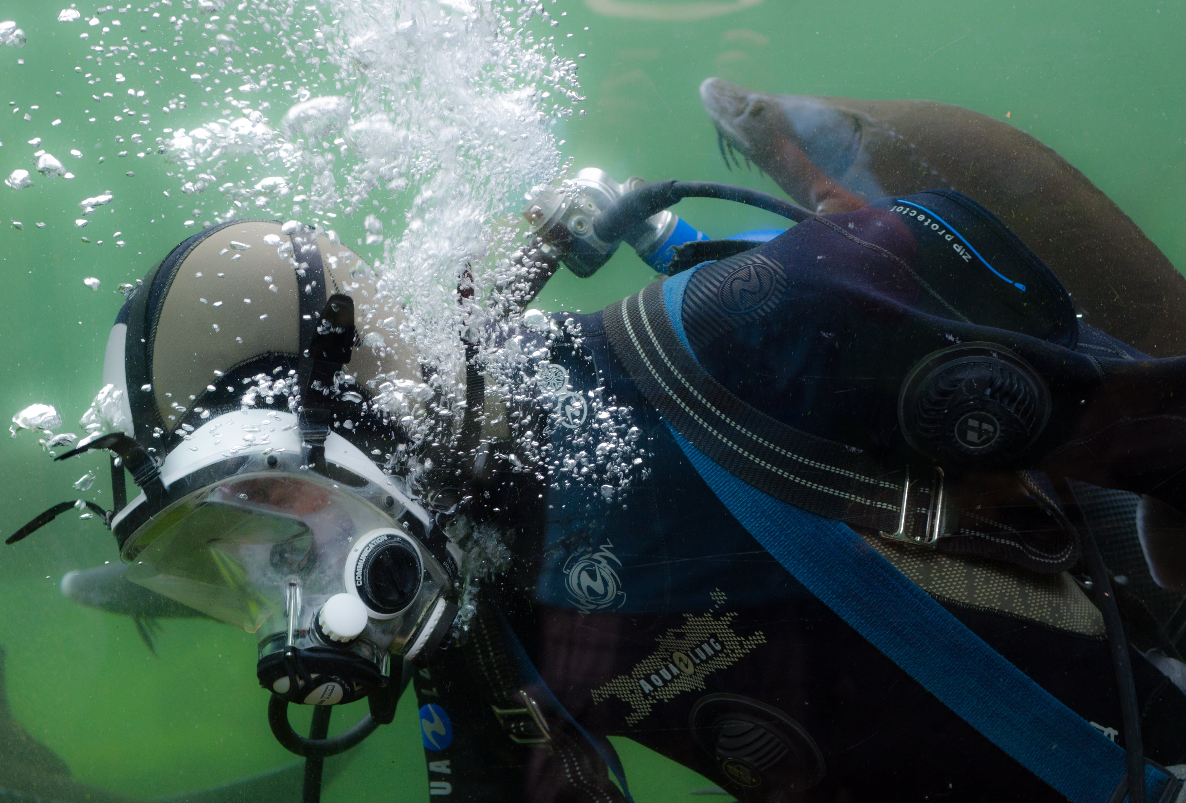 Person in Black and Blue Wetsuit Doing Scuba Diving
