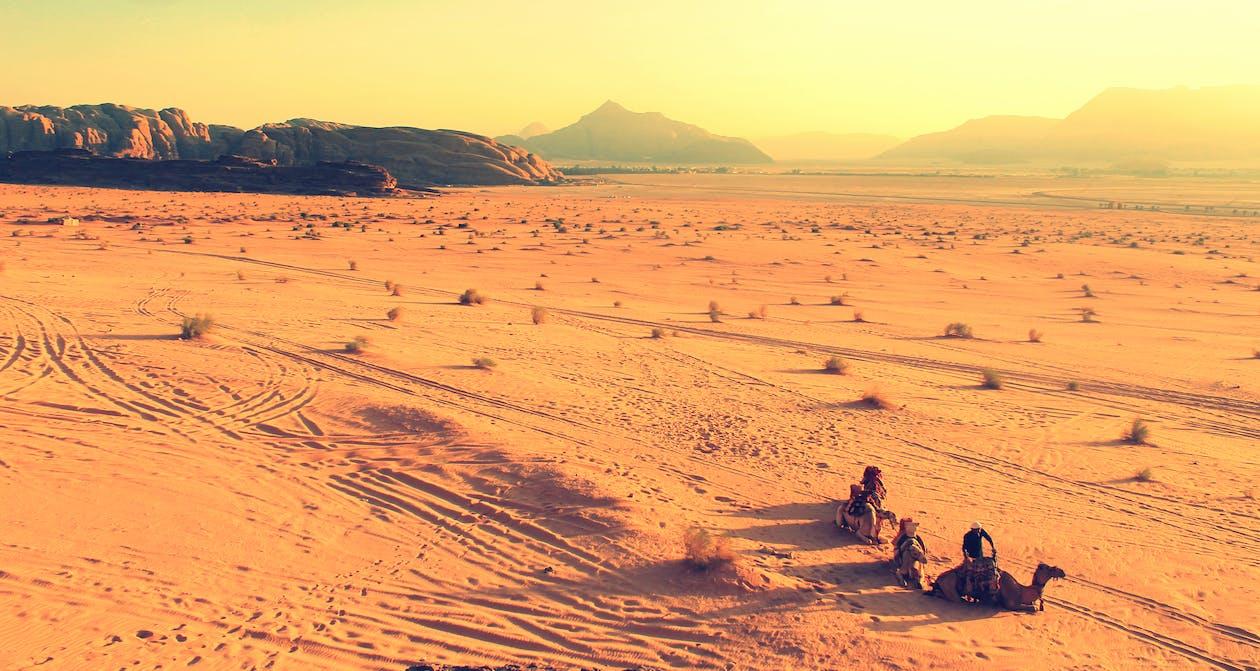 afrika, berge, kamele