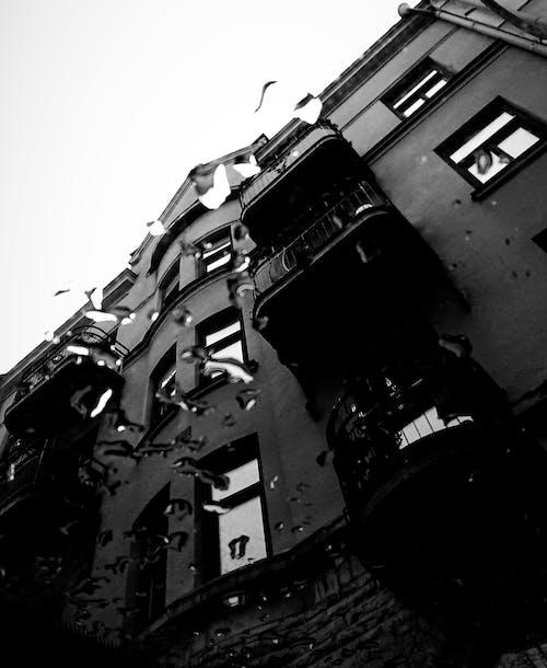 Gratis stockfoto met na de regen, zwart wit