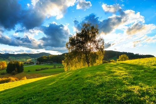 Photos gratuites de arbres, bleu, brillant, champ d'herbe